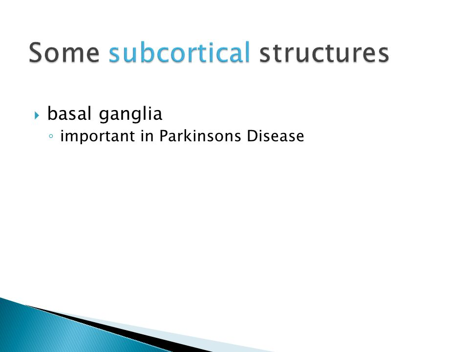 basal ganglia ◦ important in Parkinsons Disease