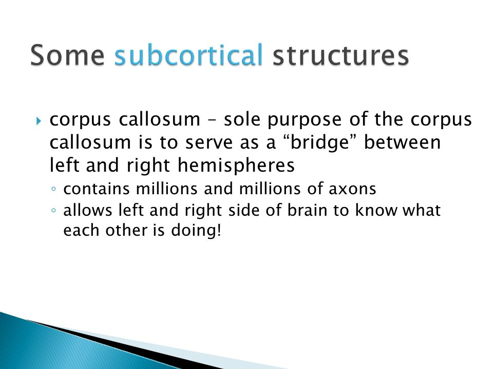  corpus callosum – sole purpose of the corpus callosum is to serve as a bridge between left and right hemispheres ◦ contains millions and millions of axons ◦ allows left and right side of brain to know what each other is doing!