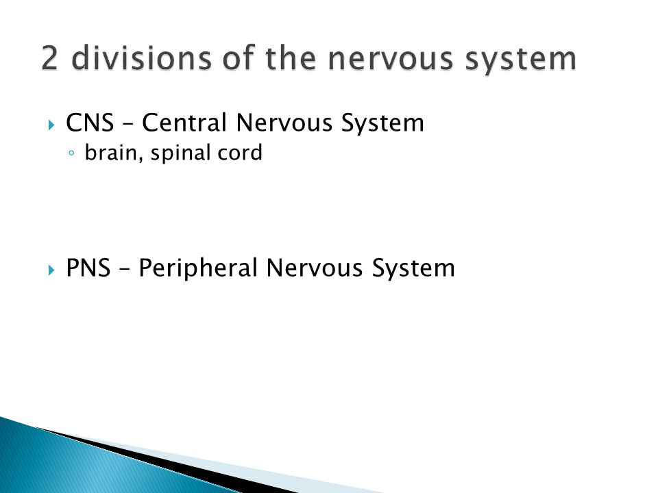  CNS – Central Nervous System ◦ brain, spinal cord  PNS – Peripheral Nervous System