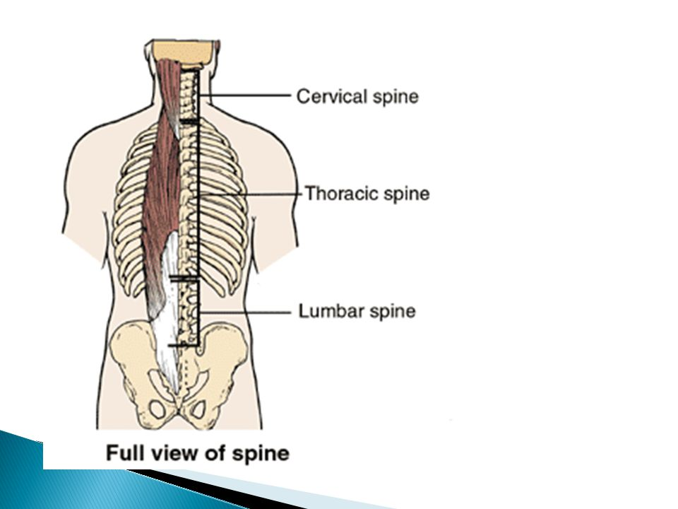Importance of the location of injury in spinal cord in understanding the type and extent of damage that a person with spinal cord injury will have dermatome map