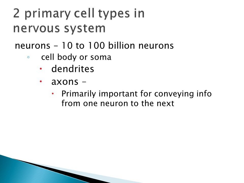 neurons – 10 to 100 billion neurons ◦ cell body or soma  dendrites  axons –  Primarily important for conveying info from one neuron to the next