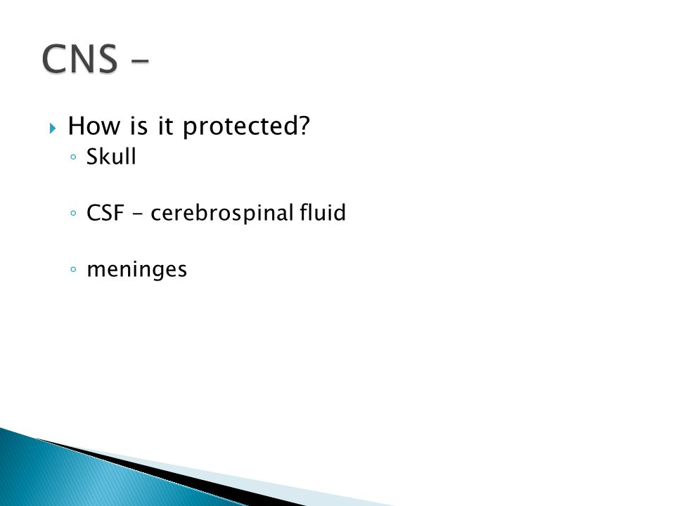 How is it protected ◦ Skull ◦ CSF - cerebrospinal fluid ◦ meninges
