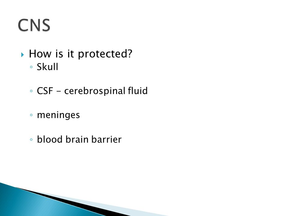  How is it protected ◦ Skull ◦ CSF - cerebrospinal fluid ◦ meninges ◦ blood brain barrier