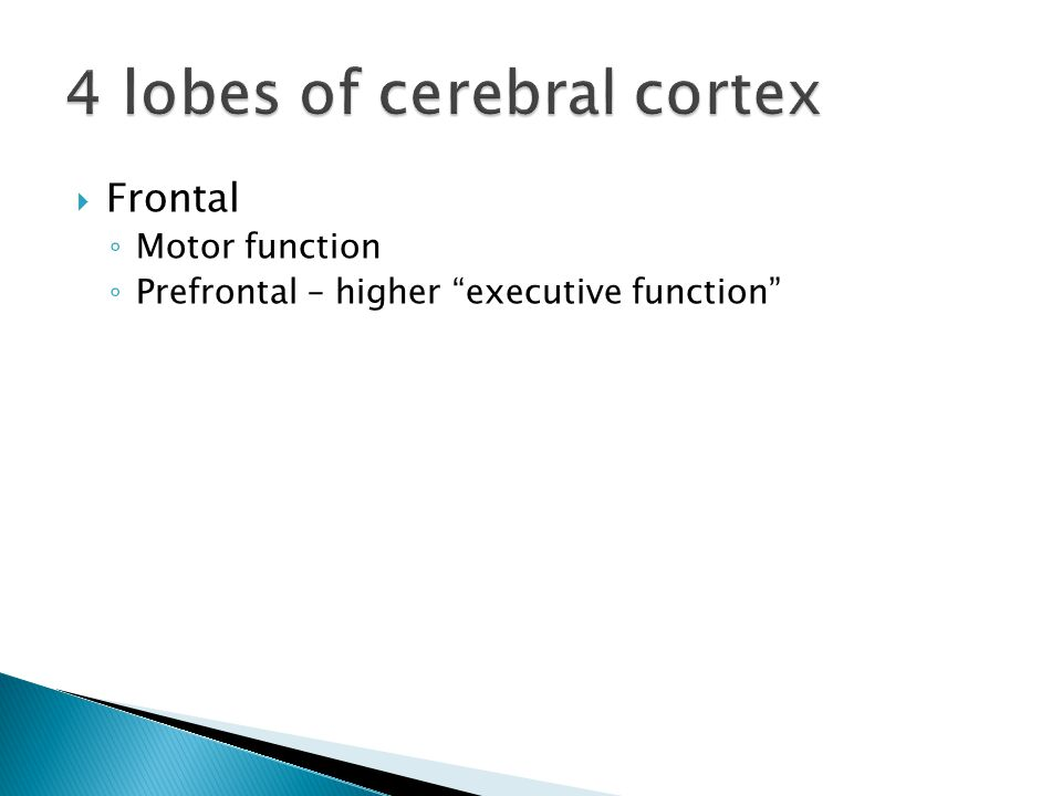  Frontal ◦ Motor function ◦ Prefrontal – higher executive function