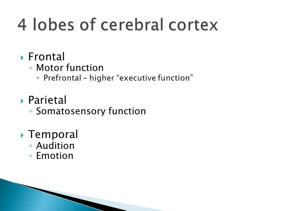  Frontal ◦ Motor function  Prefrontal – higher executive function  Parietal ◦ Somatosensory function  Temporal ◦ Audition ◦ Emotion