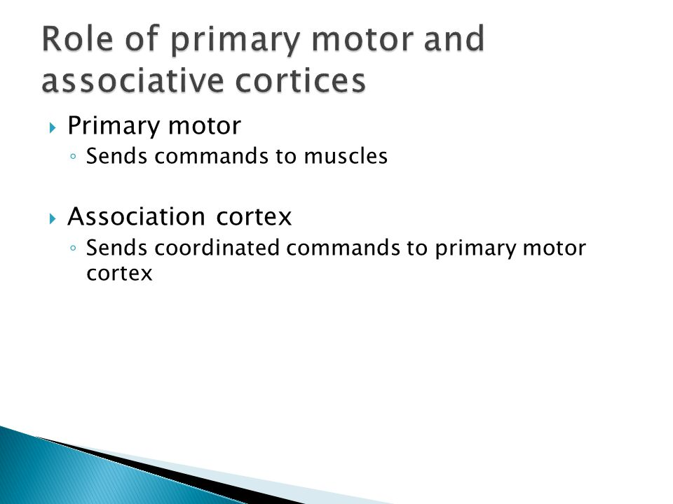  Primary motor ◦ Sends commands to muscles  Association cortex ◦ Sends coordinated commands to primary motor cortex