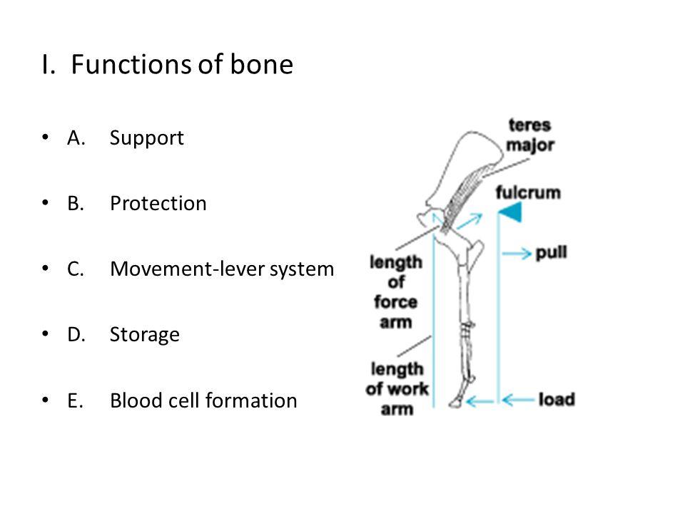 II. Classification of bones A.Long bone B.Flat bone C.Short bone D.Irregular bone