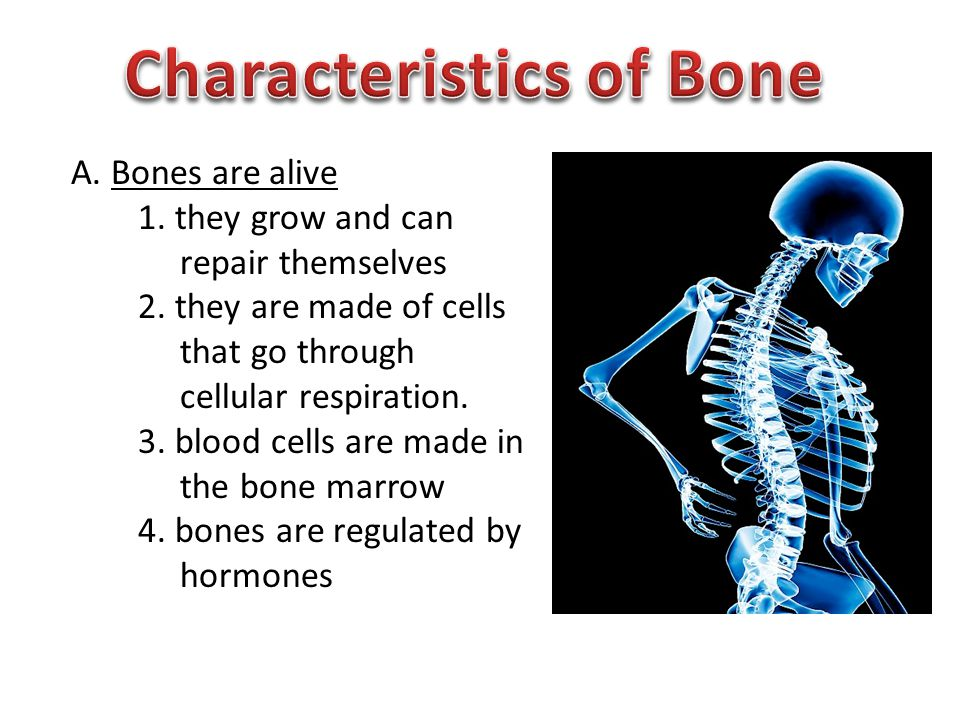 A. Bones are alive 1. they grow and can repair themselves 2.