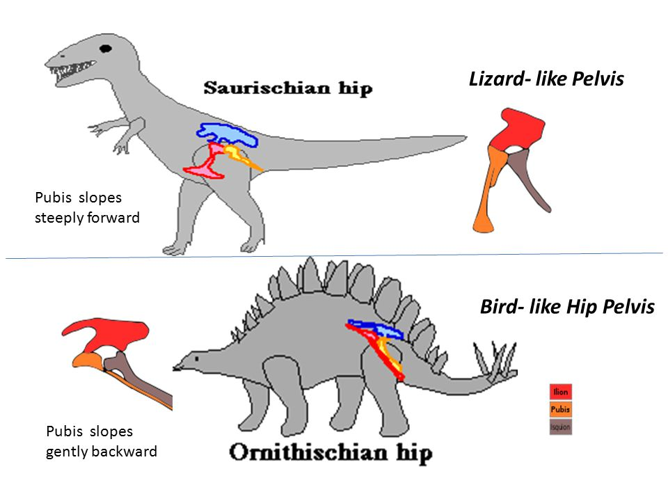 http://www.sciam.com/article.cfm?id=if-t-rex-fell-how-did-it http://www.enchantedlearning.com/subjects/dinosaurs/dinoclassification/Saurischian.html http://news.bbc.co.uk/2/hi/science/nature/3112527.stm http://www.sfgate.com/cgi-bin/article.cgi?file=/c/a/2001/02/05/MN133208.DTL&type=science http://animals.howstuffworks.com/dinosaurs/t-rex-predator-or-scavenger.htm/printable http://www.unearthingtrex.com/pages/rex_behaviour.html http://news-service.stanford.edu/pr/96/960827tyrexbite.html http://science.discovery.com/videos/mammals-vs-dinos-t-rex-bite-force.html http://news.nationalgeographic.com/news/2006/04/0405_060405_trex_video.html http://videos.howstuffworks.com/discovery/28239-assignment-discovery-tyrannosaurus-rexs-bite-force- video.htm http://www.livescience.com/animals/070518_dino_nose.html http://www.lubbockonline.com/stories/061898/LA0709.001.shtml Guinness World Records Ltd.