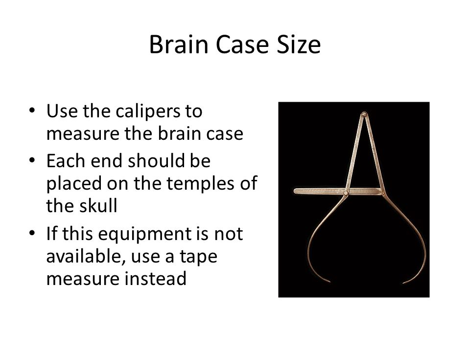 Brain Case Size Use the calipers to measure the brain case Each end should be placed on the temples of the skull If this equipment is not available, use a tape measure instead