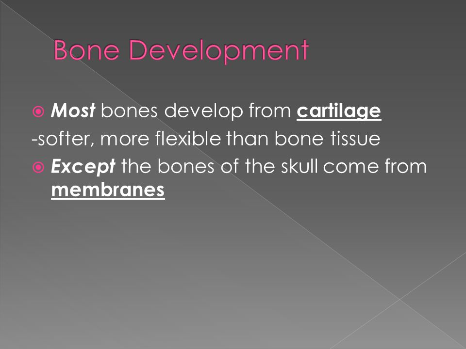  Most bones develop from cartilage -softer, more flexible than bone tissue  Except the bones of the skull come from membranes