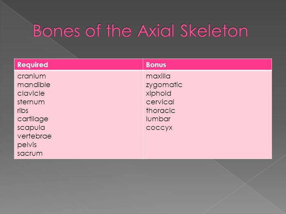 RequiredBonus cranium mandible clavicle sternum ribs cartilage scapula vertebrae pelvis sacrum maxilla zygomatic xiphoid cervical thoracic lumbar coccyx