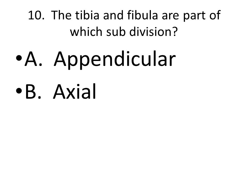 10. The tibia and fibula are part of which sub division A. Appendicular B. Axial