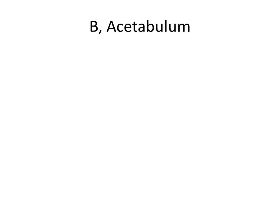 B, Acetabulum