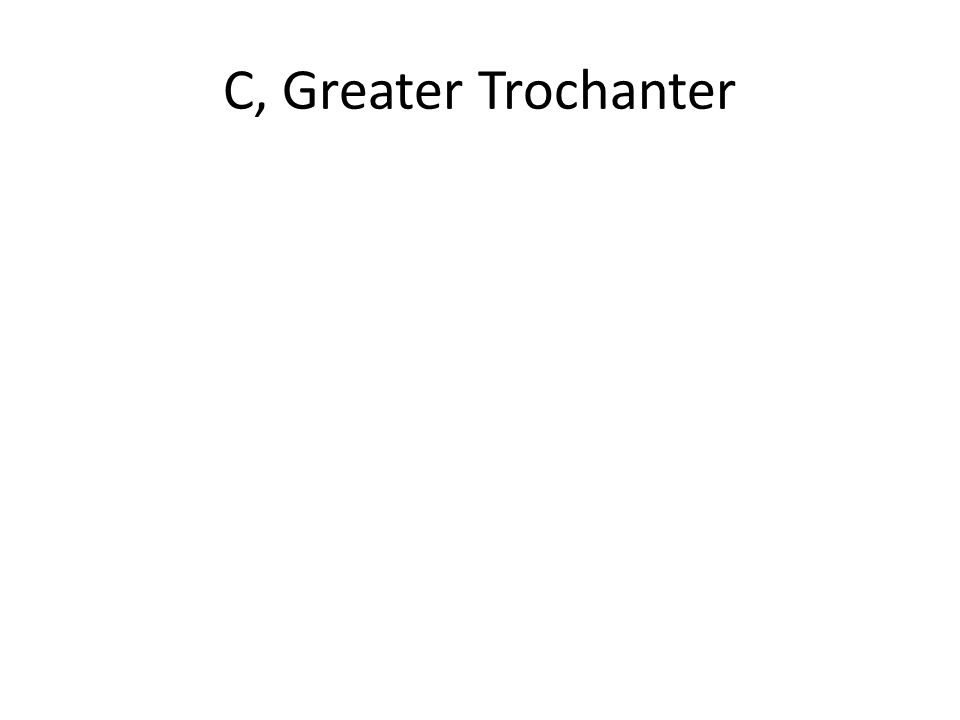 C, Greater Trochanter