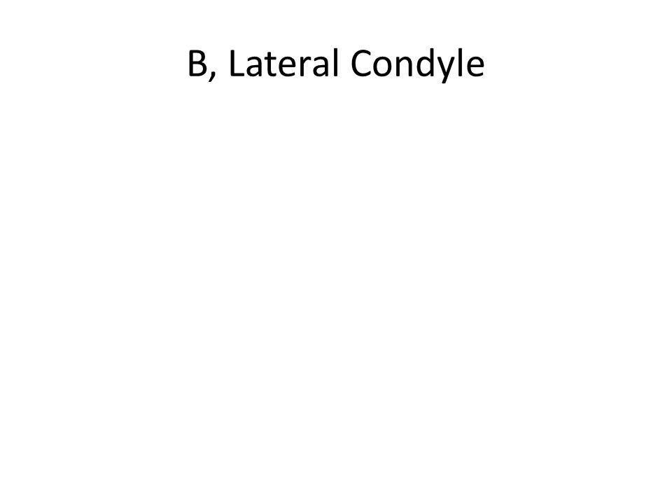 B, Lateral Condyle