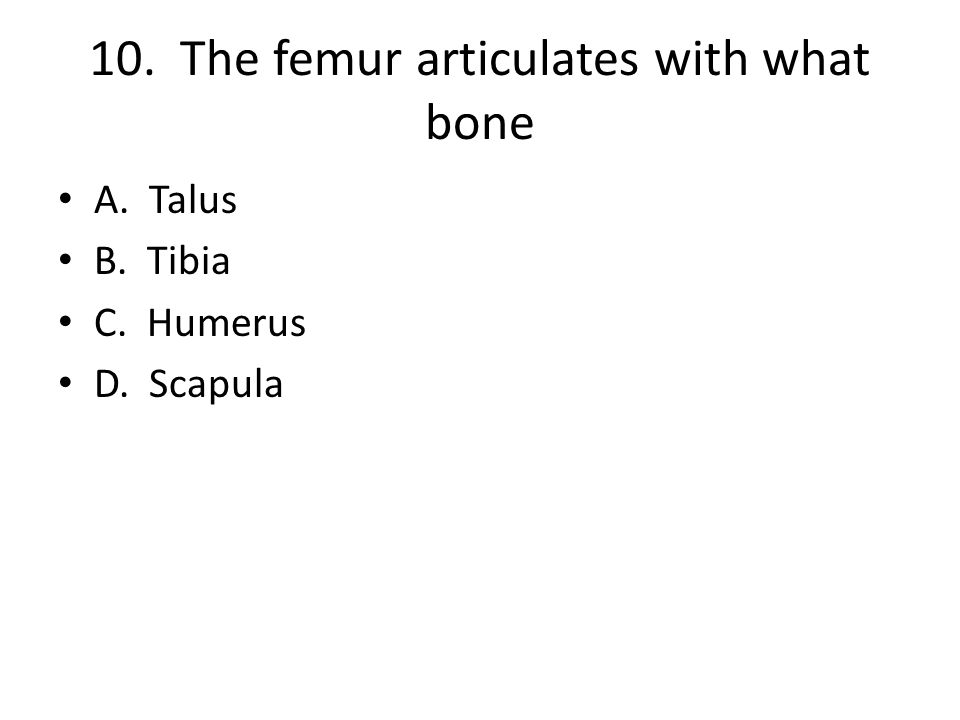 10. The femur articulates with what bone A. Talus B. Tibia C. Humerus D. Scapula