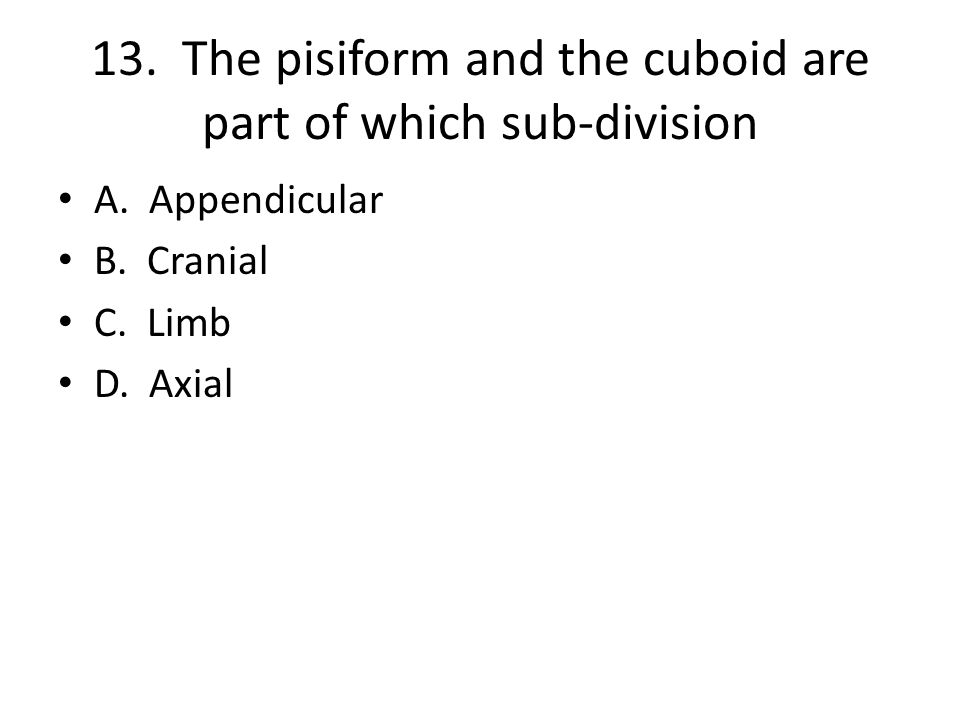 13. The pisiform and the cuboid are part of which sub-division A.