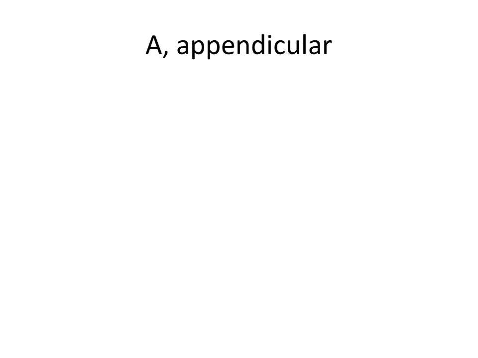A, appendicular
