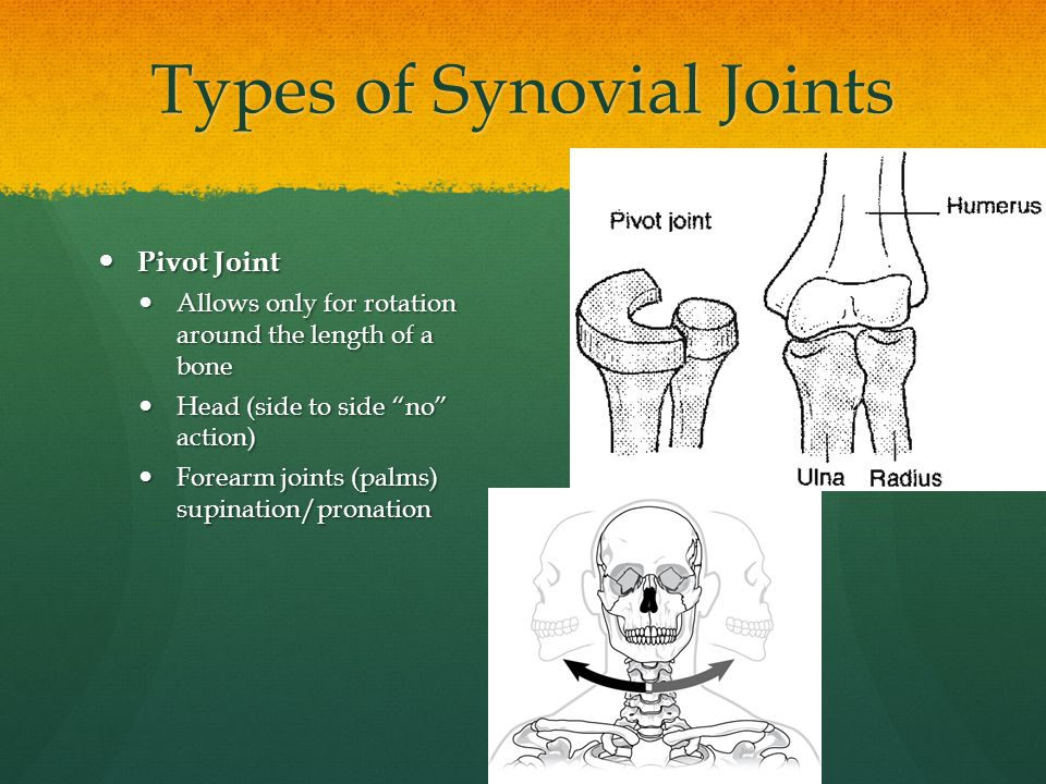 Types of Synovial Joints Pivot Joint Pivot Joint Allows only for rotation around the length of a bone Allows only for rotation around the length of a