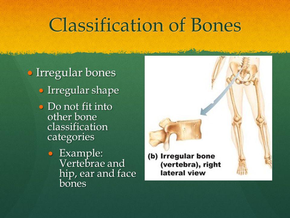 Classification of Bones  Irregular bones  Irregular shape  Do not fit into other bone classification categories  Example: Vertebrae and hip, ear a