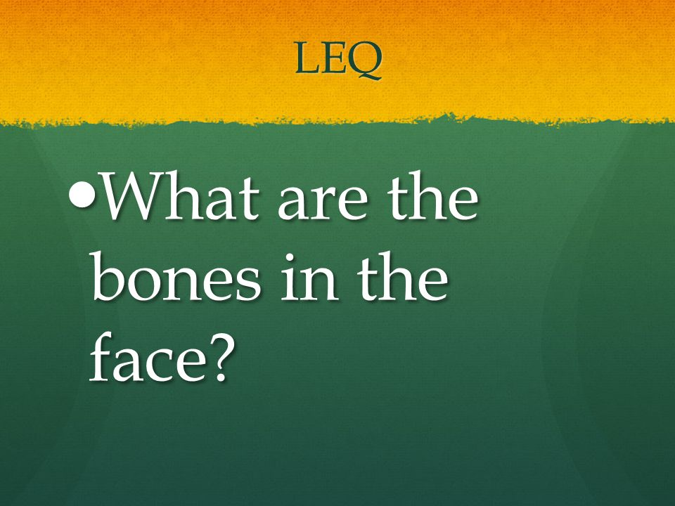LEQ What are the bones in the face? What are the bones in the face?