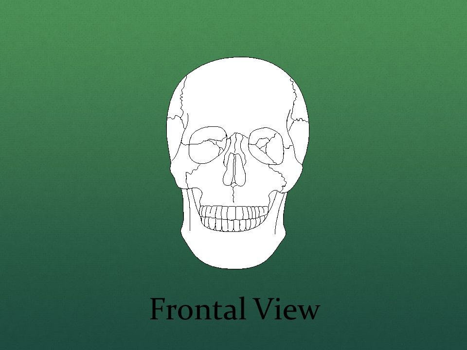 Frontal View
