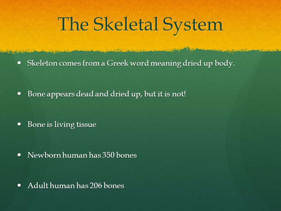 Table 13-1 Bones of the Body