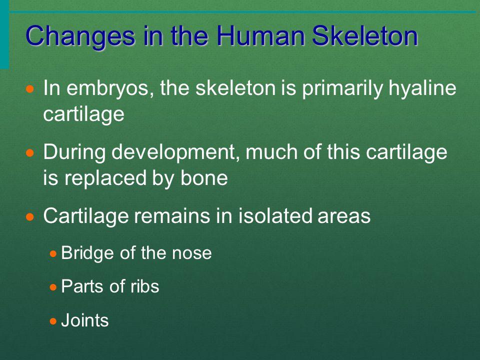 Bones of the Lower Limbs Slide 5.40a  The thigh has one bone  Femur – thigh bone