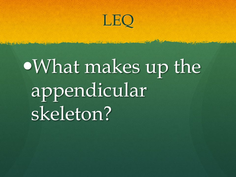 LEQ What makes up the appendicular skeleton? What makes up the appendicular skeleton?
