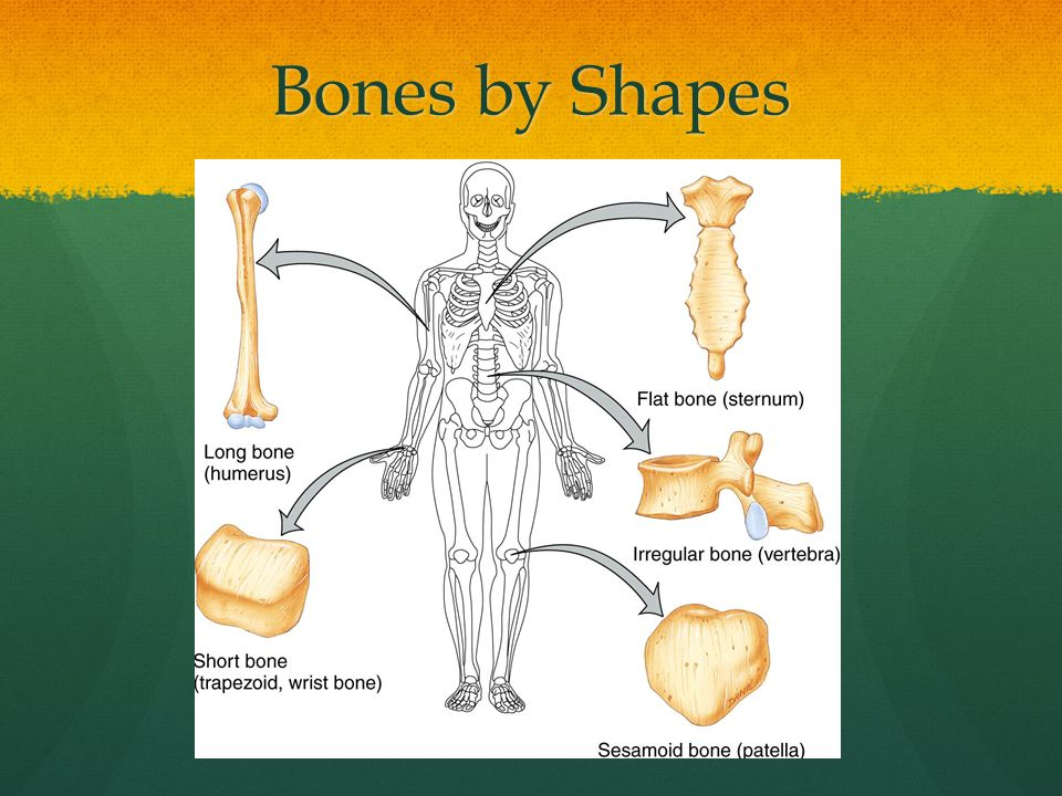 LEQ What are the types of joints and where are they located.