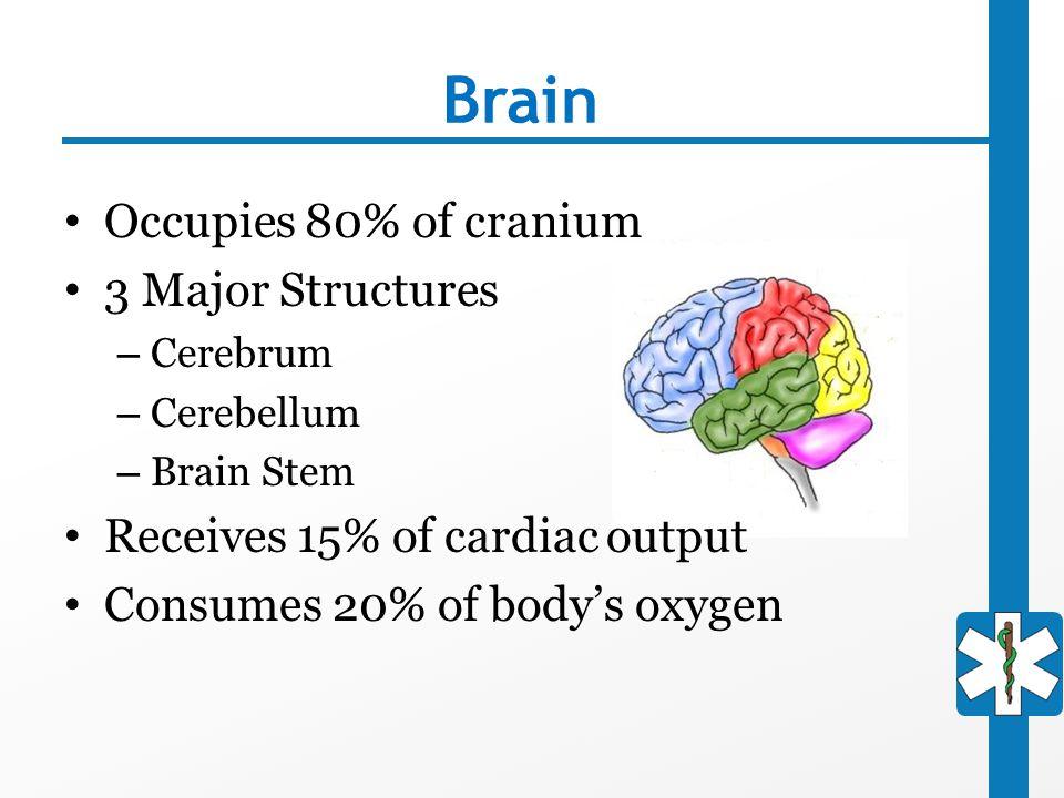 Brain Occupies 80% of cranium 3 Major Structures – Cerebrum – Cerebellum – Brain Stem Receives 15% of cardiac output Consumes 20% of body's oxygen