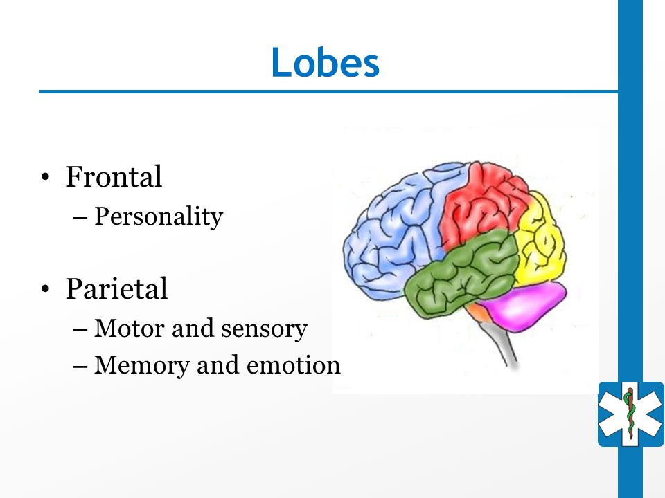 Lobes Frontal – Personality Parietal – Motor and sensory – Memory and emotion