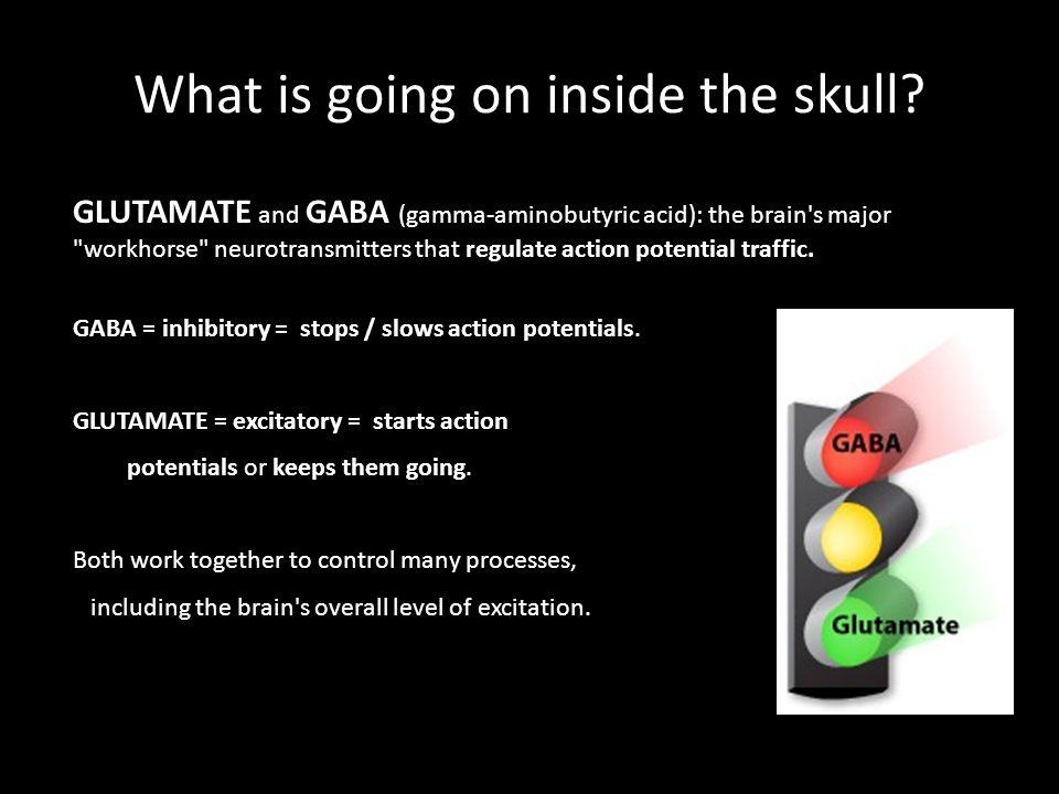 GLUTAMATE and GABA (gamma-aminobutyric acid): the brain's major