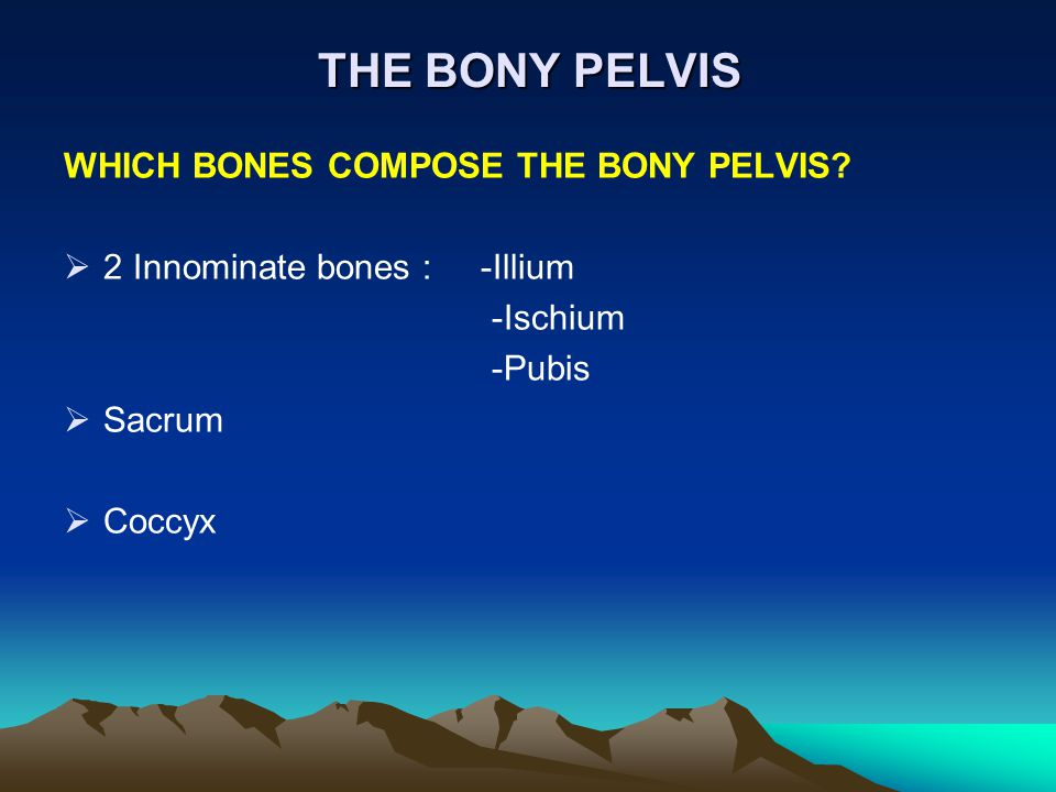 THE BONY PELVIS WHICH BONES COMPOSE THE BONY PELVIS?  2 Innominate bones : -Illium -Ischium -Pubis  Sacrum  Coccyx