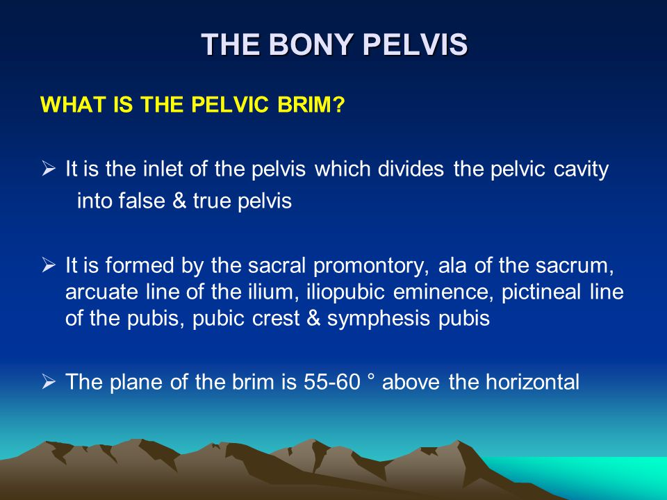 THE BONY PELVIS WHAT IS THE PELVIC BRIM?  It is the inlet of the pelvis which divides the pelvic cavity into false & true pelvis  It is formed by th