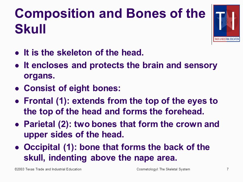 ©2003 Texas Trade and Industrial EducationCosmetologyI: The Skeletal System6 Description and Composition of the Bones Long bones are found in the arm and legs.