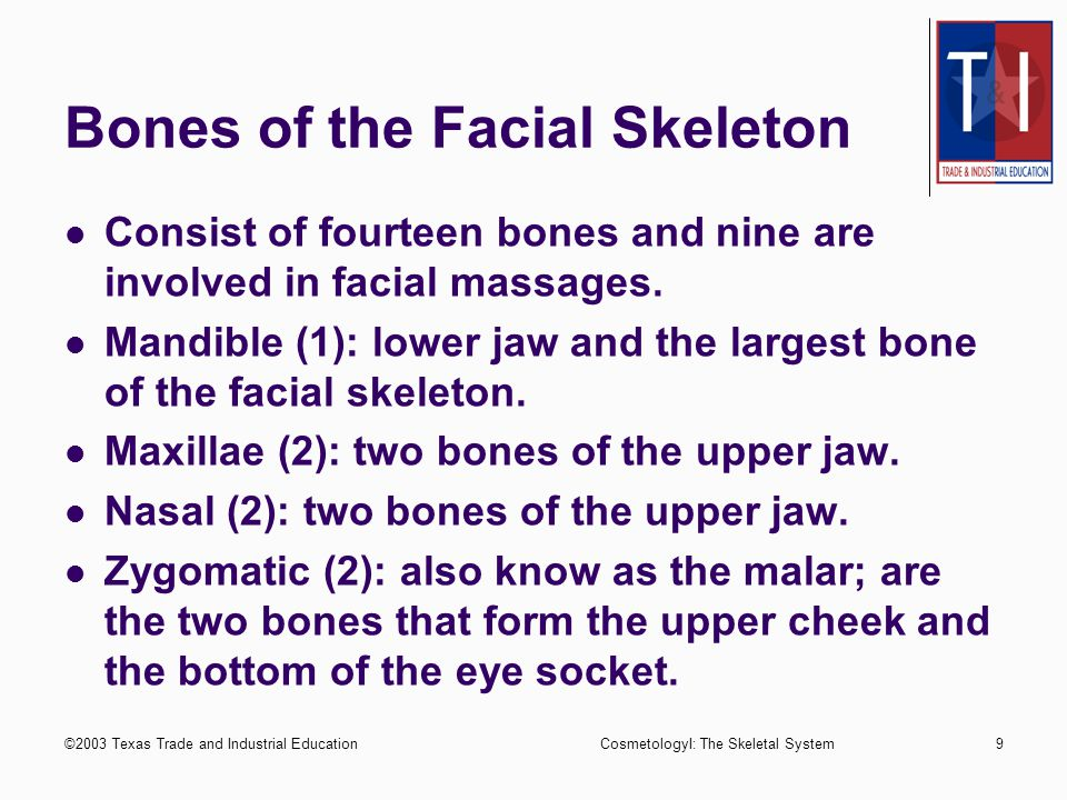 ©2003 Texas Trade and Industrial EducationCosmetologyI: The Skeletal System8 Composition and Bones of the Skull Temporal (2): two bones located on either side of the head, directly above the ears and below the parietal bones.