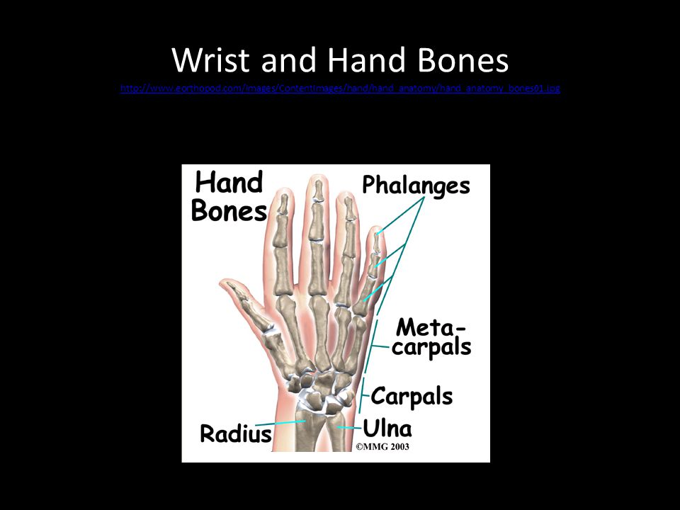 Wrist and Hand Bones http://www.eorthopod.com/images/ContentImages/hand/hand_anatomy/hand_anatomy_bones01.jpg http://www.eorthopod.com/images/ContentImages/hand/hand_anatomy/hand_anatomy_bones01.jpg