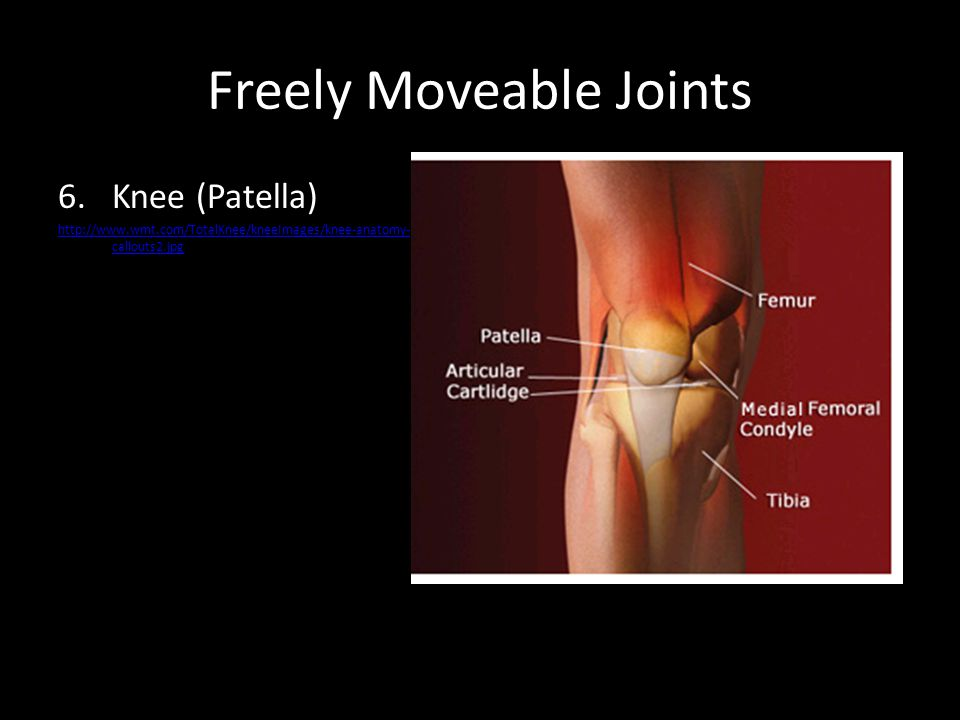 Freely Moveable Joints 6.Knee (Patella) http://www.wmt.com/TotalKnee/kneeImages/knee-anatomy- callouts2.jpg