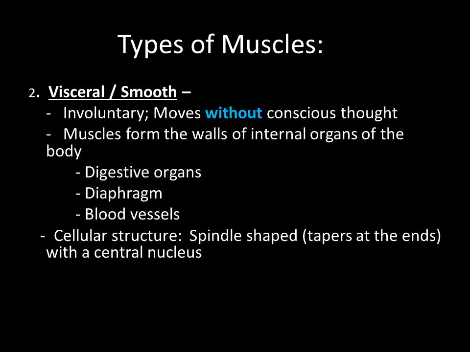 Types of Muscles: 2. Visceral / Smooth – - Involuntary; Moves without conscious thought - Muscles form the walls of internal organs of the body - Dige