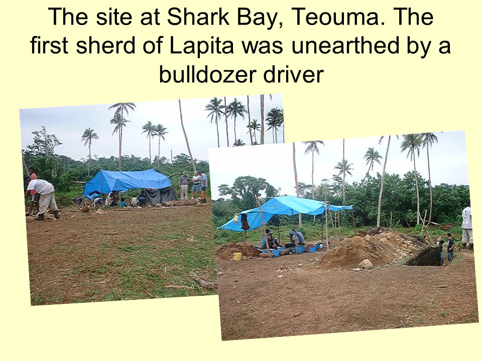 The site at Shark Bay, Teouma. The first sherd of Lapita was unearthed by a bulldozer driver
