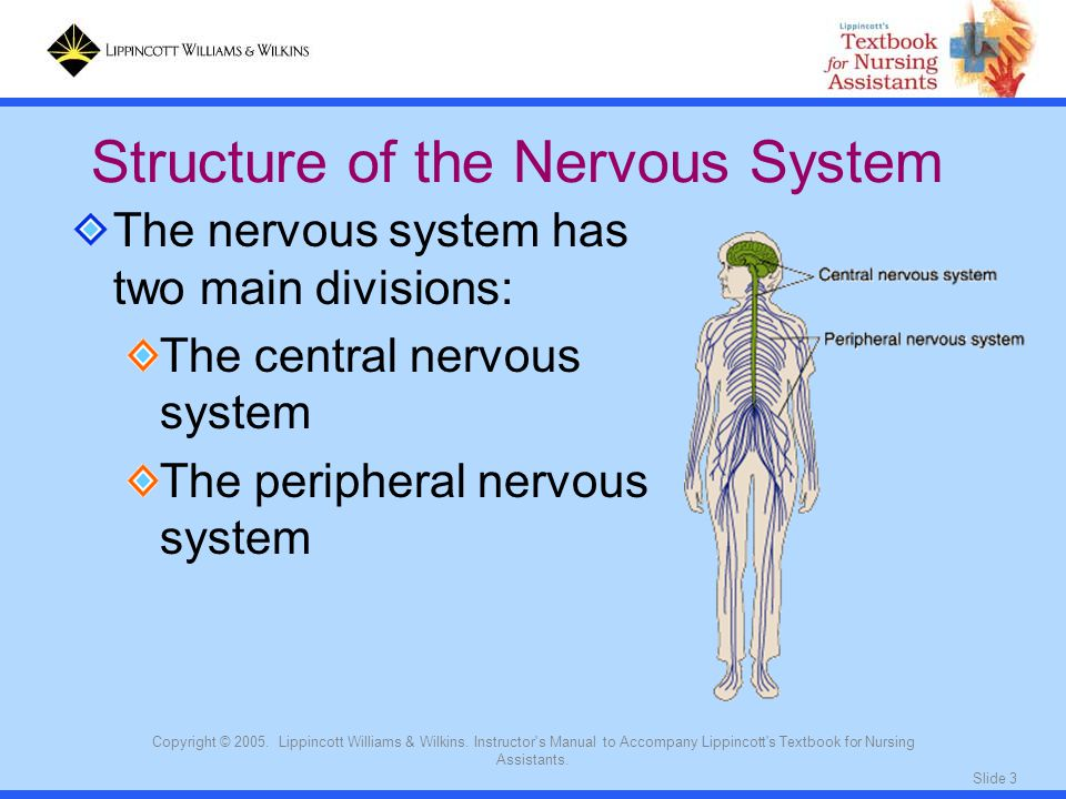 Slide 3 Copyright © 2005. Lippincott Williams & Wilkins. Instructor's Manual to Accompany Lippincott's Textbook for Nursing Assistants. The nervous sy