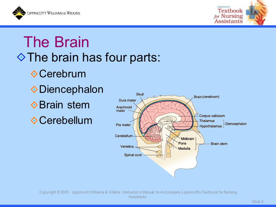 Slide 5 Copyright © 2005. Lippincott Williams & Wilkins.