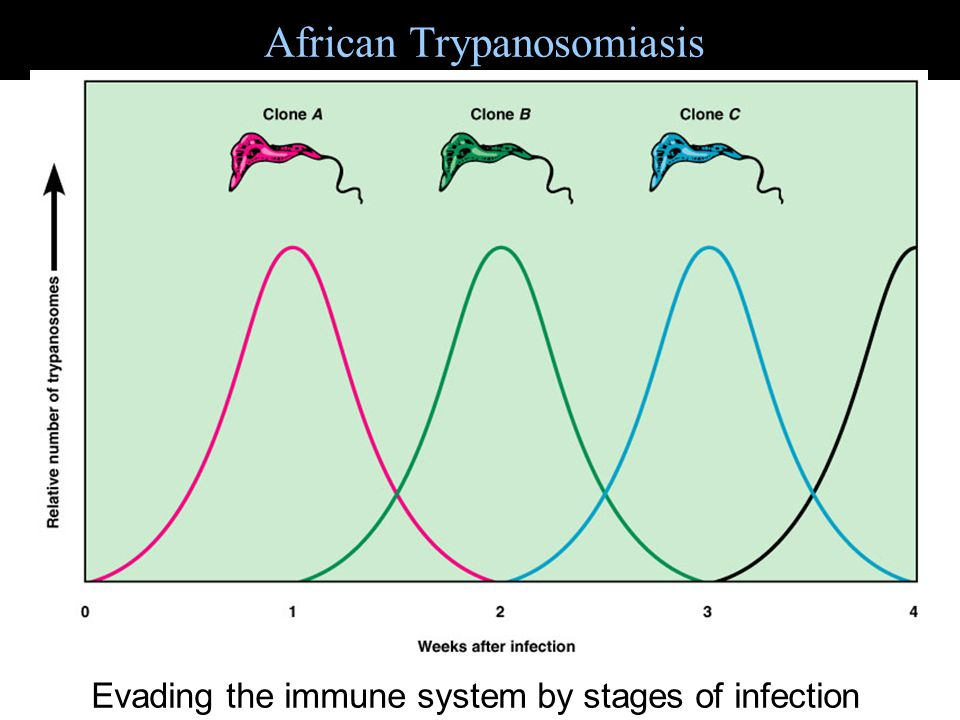 African Trypanosomiasis Figure 22.15 Evading the immune system by stages of infection