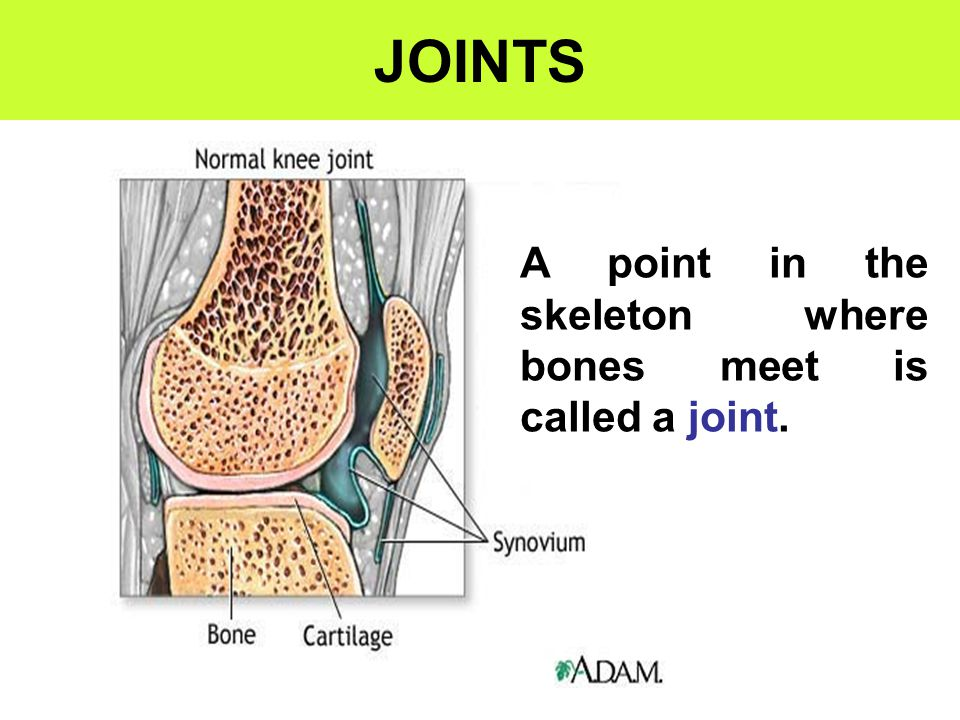 JOINTS A point in the skeleton where bones meet is called a joint.