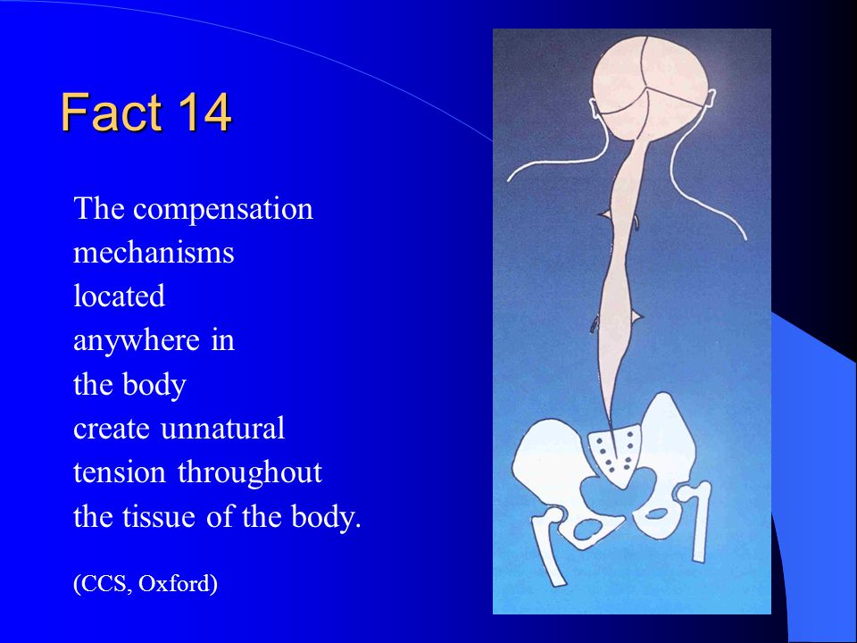 Fact 14 The compensation mechanisms located anywhere in the body create unnatural tension throughout the tissue of the body.