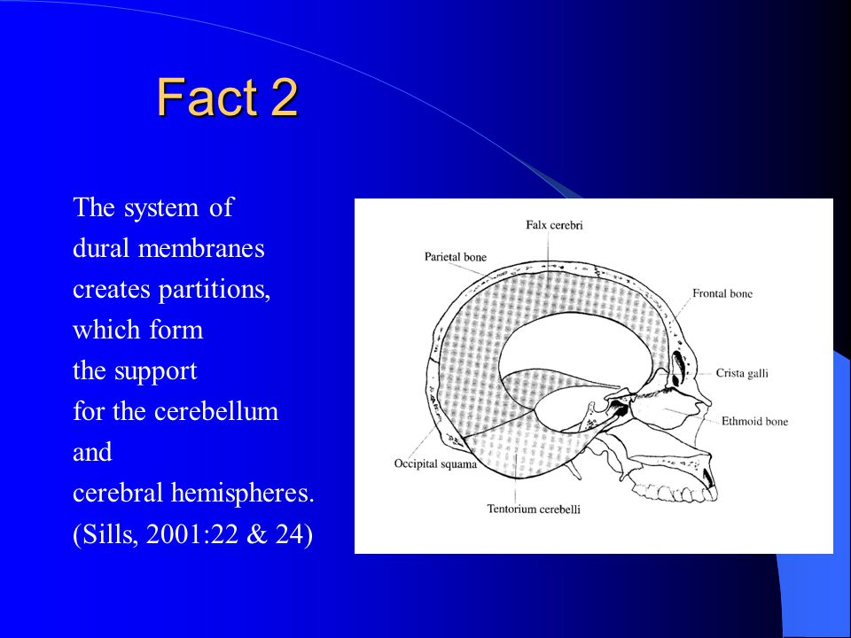 Fact 3 The cranial dural membrane is continuous with the spinal dural membrane. (Sills, 2004:53)
