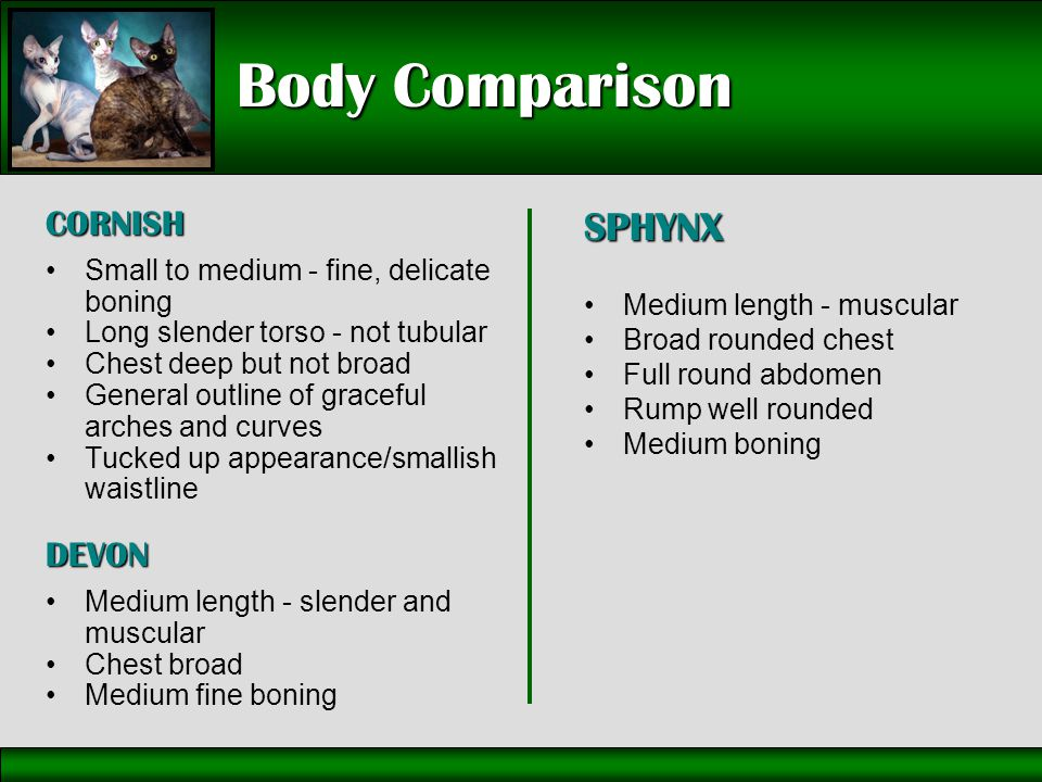Body Comparison CORNISH Small to medium - fine, delicate boning Long slender torso - not tubular Chest deep but not broad General outline of graceful