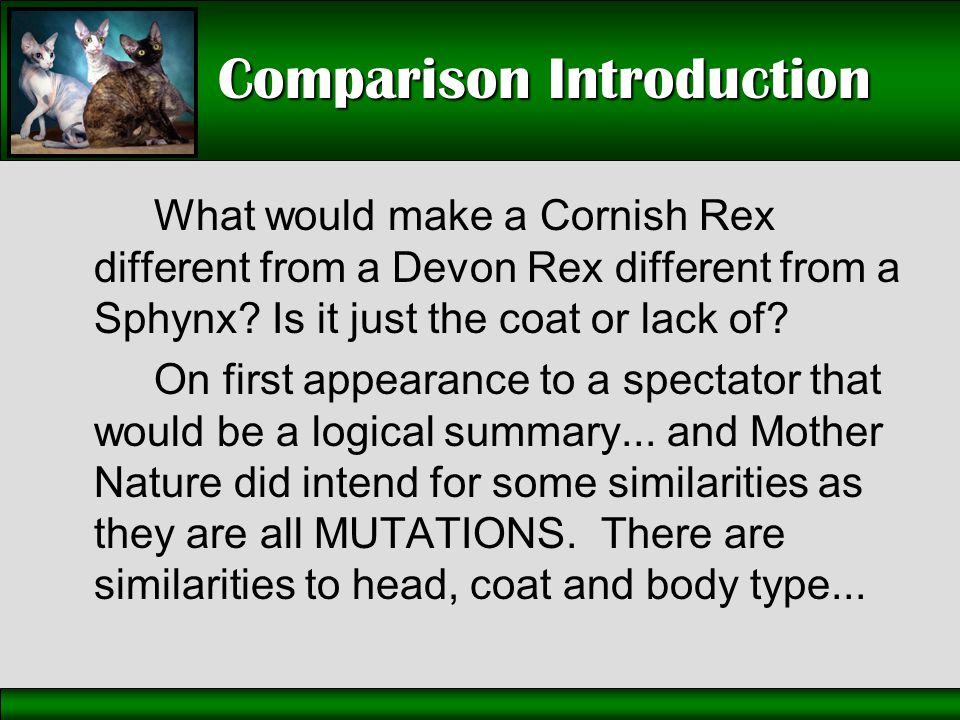 Comparison Introduction What would make a Cornish Rex different from a Devon Rex different from a Sphynx? Is it just the coat or lack of? On first app